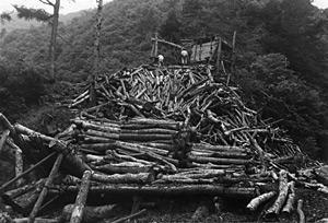 材木運搬の様子 当時は馬で運搬してました